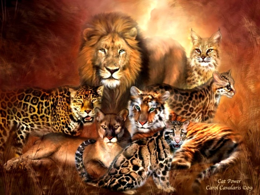 Big-Cats-wild-animals-34365409-1200-900