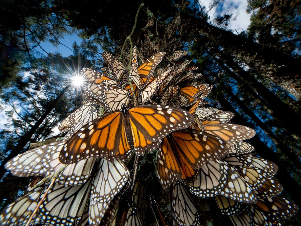 monarch-butterflies-mexico