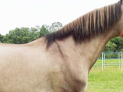 dun-shoulder1