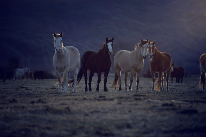 a history of horses in the american wild west 100 best historical photos of the american west history come to life december 9, 2013 by tw editors 0 0 100 0 the arrival of the daguerreotype in the 1840s could not have come at a more fortuitous time for the american west.