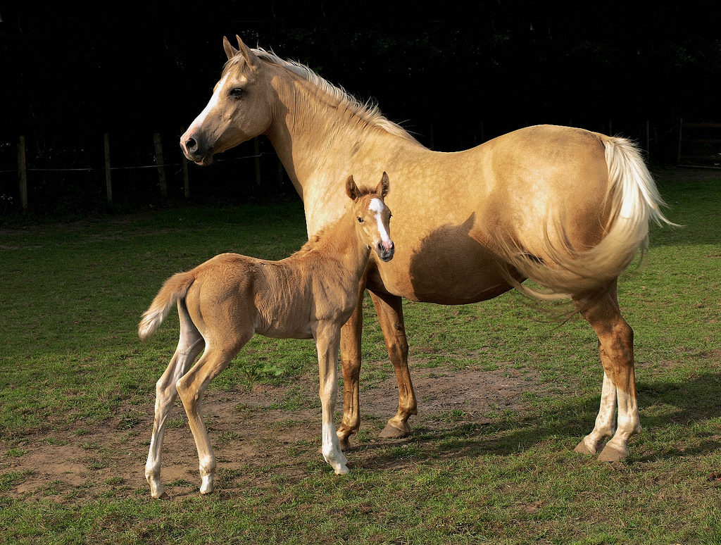 mare_and_foal_kvetina-marie